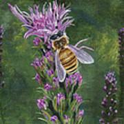 Honeybee On Liatis Art Print