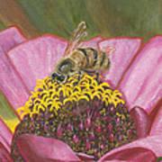 Honeybee On Pink Zinnia Art Print