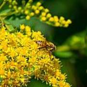 Honeybee On Yellow Art Print