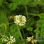 Honeybee Visit Art Print