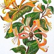 Honeysuckle Art Print