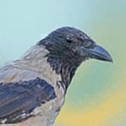 Hooded Crow Art Print