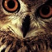 Hoot Owl Art Print