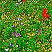 Hop Clover And Scarlet Paintbrush And Nodding Onion And Harebells Along Swiftcurrent Pass Trail-mt   Art Print