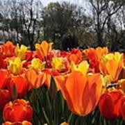 Hopping Hot Tulips Art Print