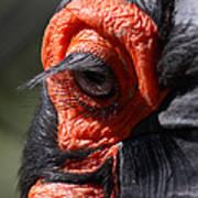 Hornbill Closeup Art Print