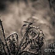 Hornet And Thorn - B Art Print