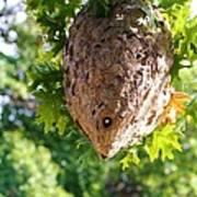 Hornets Nest Art Print