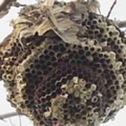 Hornet's Nest Art Print by Todd Sherlock