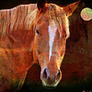Horse 7 Art Print