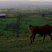 Horse And Farmhouse Art Print