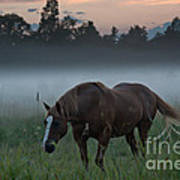 Horse And Fog Art Print