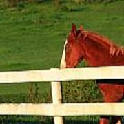Horse And White Fence Art Print