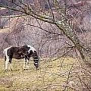 Horse And Winter Berries Art Print