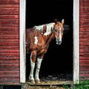 Horse - Barn Door Art Print