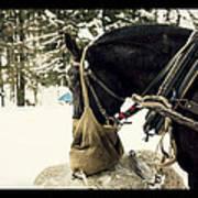 Horse Cinema Style Art Print