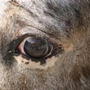 Horse Close Up Art Print