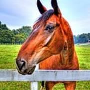 Horse Closeup Art Print