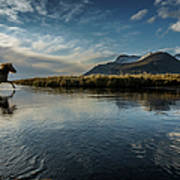 Horse Crossing A River, Iceland Art Print