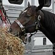 Horse Eating Hay Art Print
