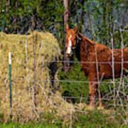 Horse Eating Hay In Eastern Texas Art Print
