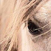 Horses Soul Art Print