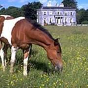 Horse Grazes Near St. Clarens Art Print