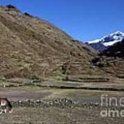 Horse Grazing In The Cordillera Apolobamba Foothills Art Print