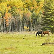 Horse Grazing In Field Autumn Maine Art Print