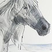 Horse Head Drawing Art Print