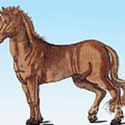 Horse Historiae Animalium  Art Print