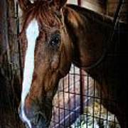 Horse In A Box Stall - Horse Stable Art Print