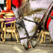 Horse In Cracow Art Print