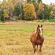 Horse In Field-fall Art Print