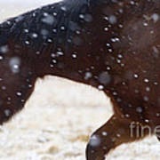 Horse In Snow   #5425 Art Print