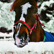 Horse In The Snow Art Print