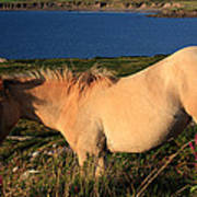 Horse In Wildflower Landscape Art Print