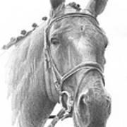 Horse Knotted Mane Pencil Portrait Art Print