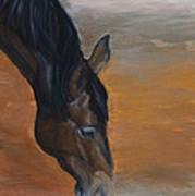 horse - Lily Art Print