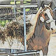 Horse N Hay Art Print