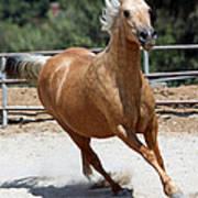Horse On The Run Art Print