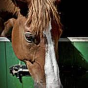 Horse Portrait Art Print