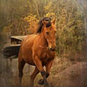 Horse Power Art Print