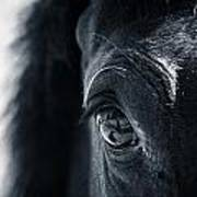Horse Reflection Art Print
