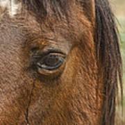 Horse Tear Art Print