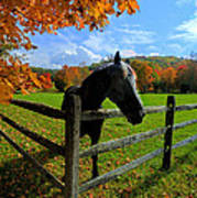 Horse Under Tree By Fence Art Print