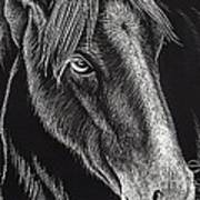 Horse Up Close Art Print