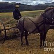 Horsedrawn Harvester Hay Rake On The Berta Ranch Carmel Valley California Circa 1950 Art Print