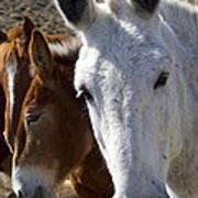Horses And Mules   #0757 Art Print