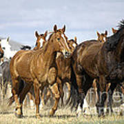 Horses-animals-2 Art Print